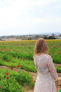 Flower fields (1 of 1)