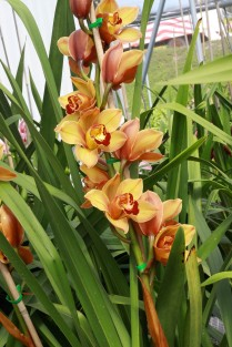 Flower fields21 (1 of 1)