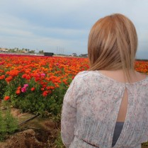 Carlsbad Flower Fields.