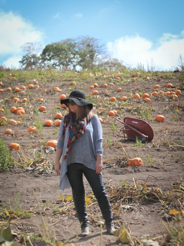 pumpkin-patch-6